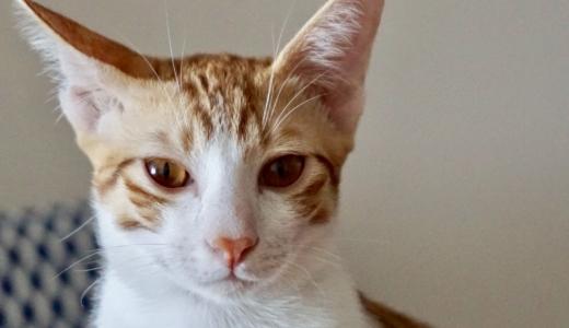 子猫の猫白血病(FeLV) が陰転するまでの日々(後編)
